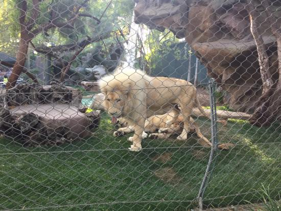 Picture Of Siegfried Roy 39 S Secret Garden And Dolphin Habitat Las Vegas Tripadvisor