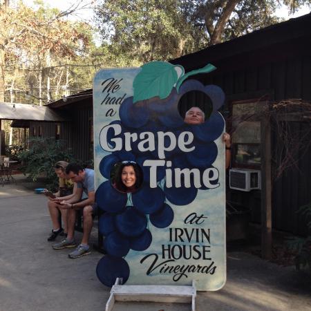 Wadmalaw Island, Carolina Selatan: irvin vineyard