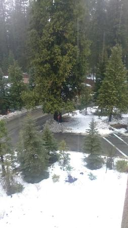 Tenaya Lodge at Yosemite: View from room.