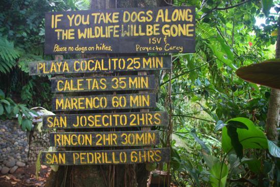 Aguila de Osa Inn: Good hikes leaving the edge of the hotel grounds.