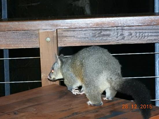 Woollamia, Αυστραλία: DSCN0981_large.jpg