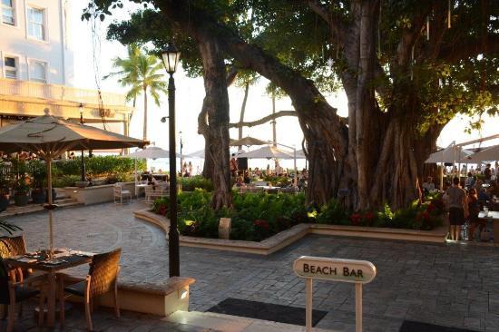 The Banyan Tree At Waikiki Beach