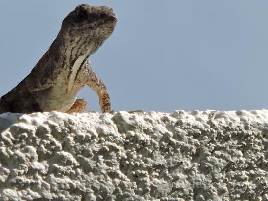 Boca Grande, FL: Lizard basking in the sun
