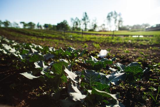 Mattawan, MI: Our Garden