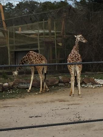 Birmingham Zoo: photo9.jpg