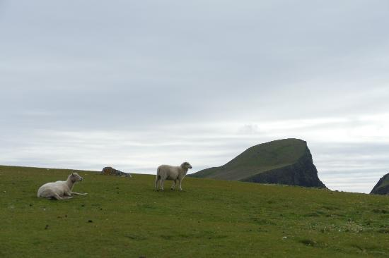 Sheep Rock with Sheep - Picture of Fair Isle Lodge & Bird ...