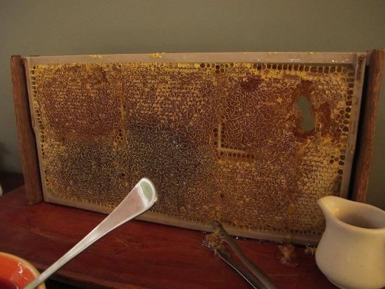 Woollamia, Αυστραλία: Honey anyone?