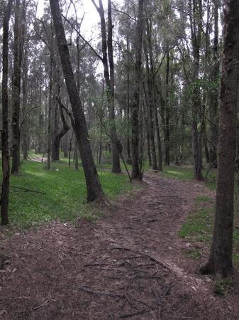 Woollamia, Αυστραλία: Wetlands Walk