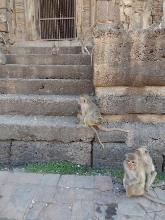 Lop Buri, Tailandia: is a group of monkey's a gaggle?