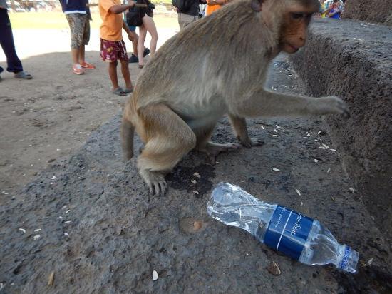 Lop Buri, Tailandia: break for more water