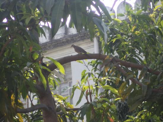 Public Gardens (Bagh-e-aam)