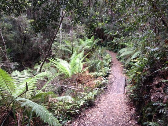 Tasmania, Australia: Rainforest on the way to Donaghy's Hill Lookout