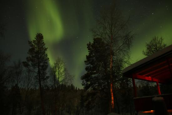 Svanvik, นอร์เวย์: Nordic lights from Birk Husky wilderness cabin
