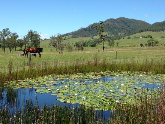 Barrington Hideaway: Horse, mountains and lily pond