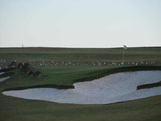 Yering Gorge Cottages: Golf course