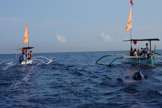 Lovina Beach: Плаваем на лодке с дельфинами