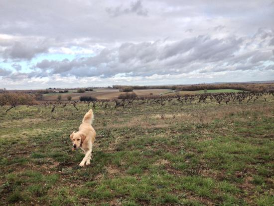 Fine Wine Tours : Great view from Astrid's farm