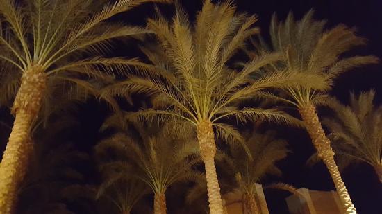 Siva Port Ghalib : xxxxxkkkk