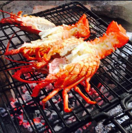 Scarborough, Sydafrika: Freshly caught crayfish right off the beach!