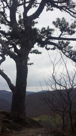 Seneca Rocks, WV: amazing views!!