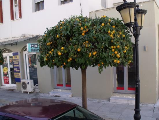 Nauplion Promenade: Oranger dans la rue