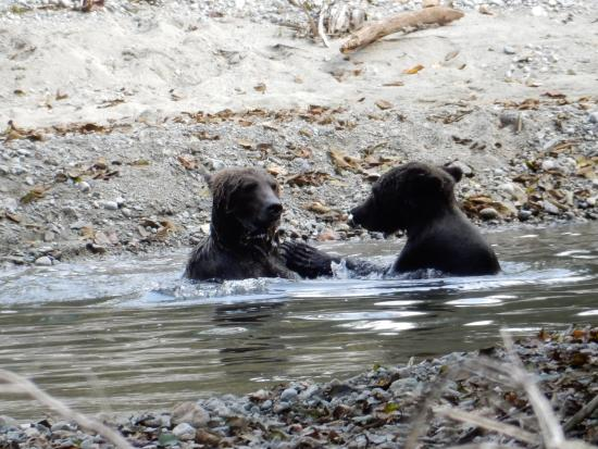 Campbell River, Καναδάς: Two brothers taking a break from river wrestling