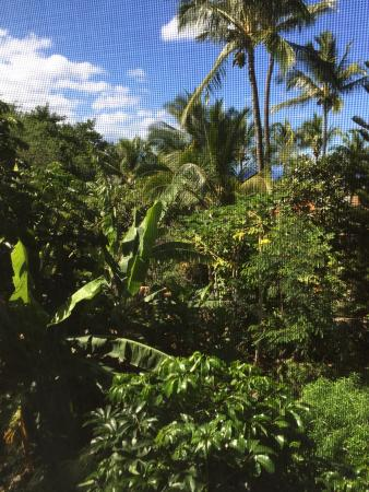 Wailea Massage and Body Care: The view of bushes and greenery, looking out into a local neighourhood.