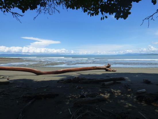 Pavones, คอสตาริกา: A shady spot to film SUP-surfers at Leftovers beach.