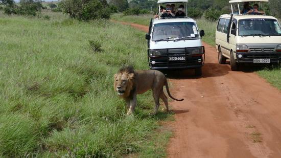 Let's Go Wild Safaris - Day Tours