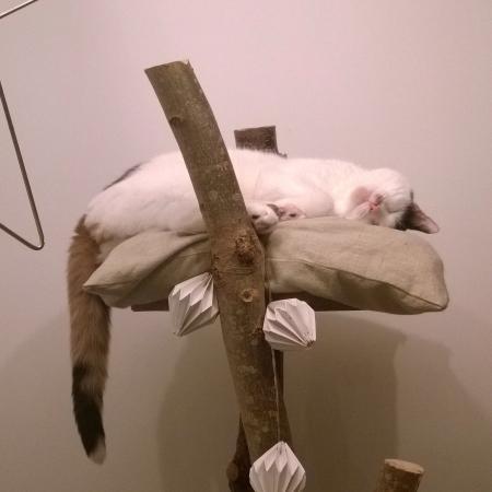 Kattencafe Kopjes