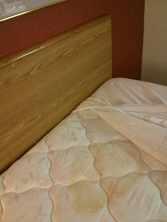 Kennett, MO: Huge stain at head of bed.  Darker than in photo.