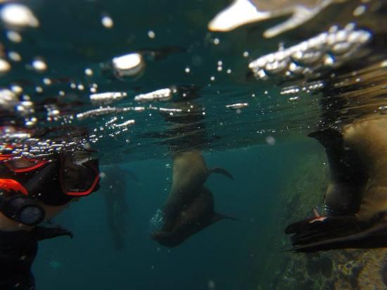 Kicker Rock: Lobos marinos