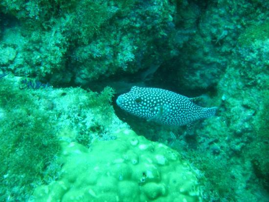 Silent World Divers: Lovely