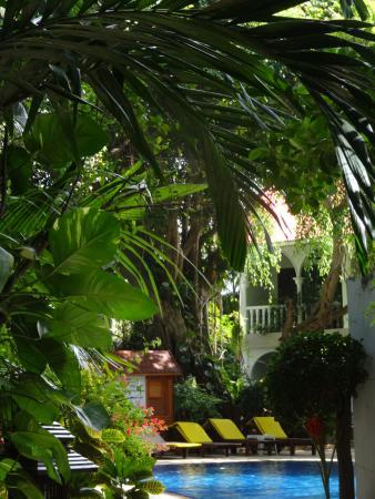Tropica Resort and Restaurant : Garten