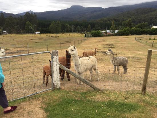 Maydena, Austrália: photo0.jpg
