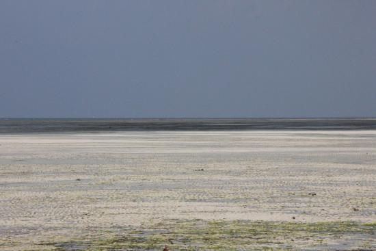 Jumbo Club Orange : Spiaggia durante la bassa marea