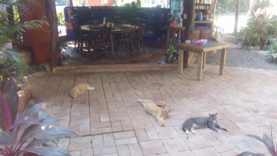 Casa Ki : Un refugio de gatos, una pena