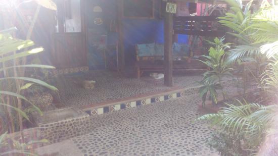 Casa Ki : Y más gatos