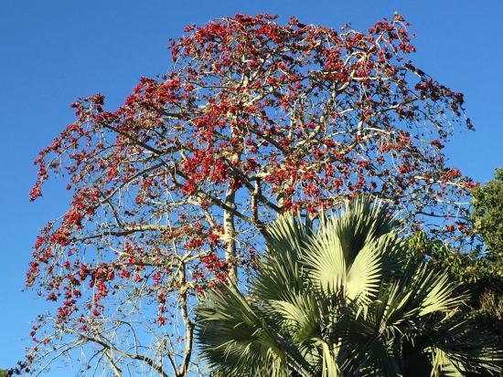 Marie Selby Botanical Gardens : photo2.jpg