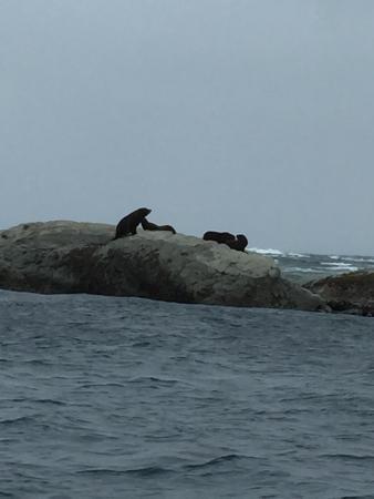 Koura Bay Fishing Charters: photo1.jpg