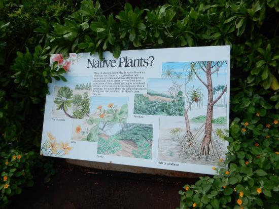 Kilauea, Hawaje: good signage