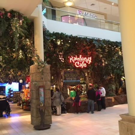 Burlington Mall Rainforest Cafe Hours