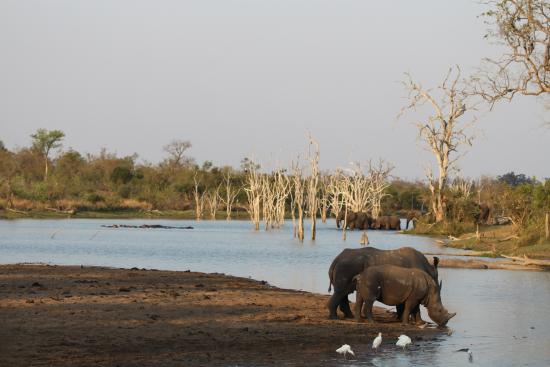 Mjejane River Lodge: Rhinos, Hippos & Elephants all at once