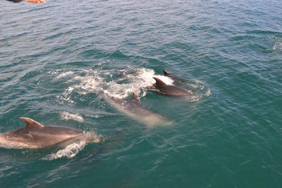 Bay of Islands, Selandia Baru: nature
