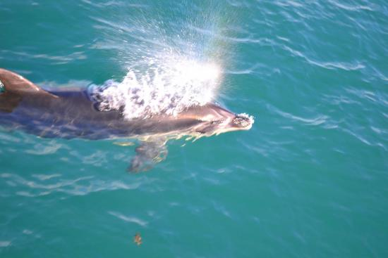 Bay of Islands, Selandia Baru: relax