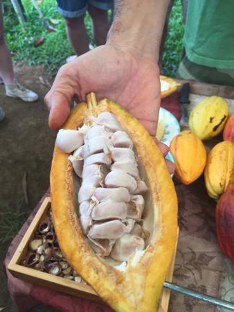 Kilauea, Hawái: Cocao Pod Opened