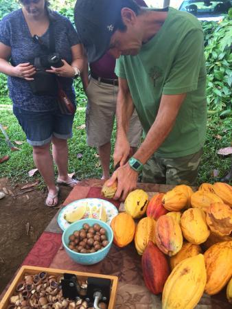 Kilauea, Hawái: Kia Opening Cocao Pod