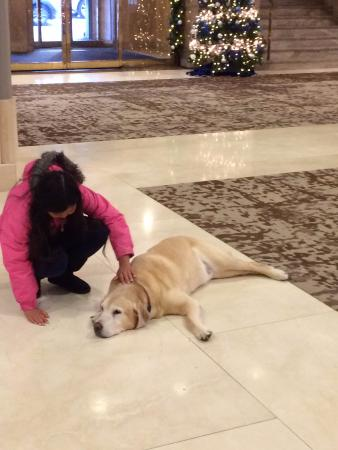 Fairmont Hotel Vancouver: Hotel Dog
