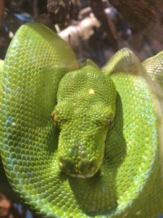 snake picture of zoo atlanta atlanta tripadvisor. Black Bedroom Furniture Sets. Home Design Ideas