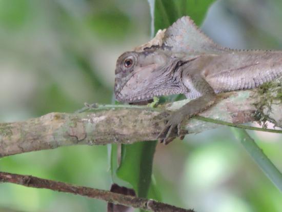 Costa Rica Jade Tours: Cute little guy!